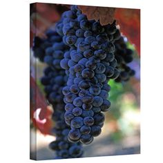 @Overstock - Artist: Kathy Yates  Title: On The Vine   Product type: Wrapped Canvas http://www.overstock.com/Home-Garden/Kathy-Yates-On-The-Vine-Canvas-Art/7588066/product.html?CID=214117 $42.29