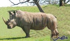 وحيد القرن مهدد بالانقراض في جنوب أفريقيا: قالت إدارة شئون البيئة بجنوب أفريقيا ، إن الصيادين قتلوا 428 من حيوان وحيد قرن في البلاد منذ…