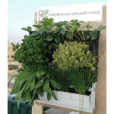 Mur végétal BRIQUE VERTE blanc végétalisé sur balcon
