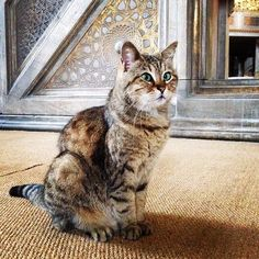 Gli, the Hagia Sophia Housecat. 21 Instagram Cat Pictures That Will Make You Pack and Leave for Istanbul Today #cats #travel #Istanbul
