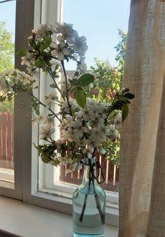 kirsikkapuun kukat