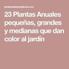 23 Plantas Anuales pequeñas, grandes y medianas que dan color al jardín