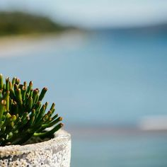 Succulents and pittwater || photo @alexmarksphotography