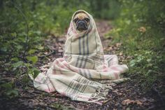 35 Adorable Pets Who Snuggled With Their Blankies - Mr. Cute Animals - Love this funny pug! Dressage, Ville New York, Cat Dog, Funny Dogs, Funny Puppies, Dog Training, Crate Training, Training Tips, Best Dogs