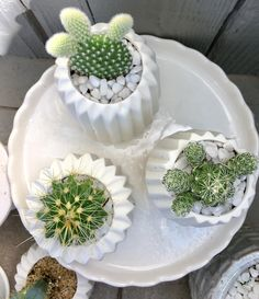 Prickly beauties...