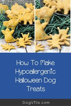 You already have your pup on the best hypoallergenic dog food, but finding great hypoallergenic dog treats can seem a little daunting at times. Halloween Cookie Cutters, Halloween Cookies, Fall Recipes, Dog Food Recipes, Hypoallergenic Dog Treats, Best Dog Food, Dog Halloween, Gingerbread Cookies, Pup