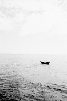 Goodbye whale.