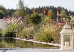Marvelous Kniphofia Fackellilie mi Gr sern und Stauden in einem modernen Garten mit Wasserbecken modern garden border
