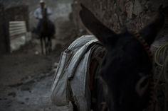 BROKEN MEXICO http://theimagista.com/broken-mexico/  Photographer: Maxim Morin  #imagista #imagistalifestyle #lifestyle #mexico #mule