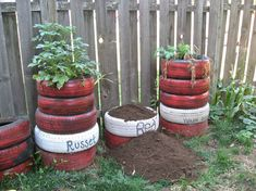 Potato towers using tires! I am not sure about the rubber near the potatoes? This gardener had success with Yukon Golds, which are the ones I am trying.