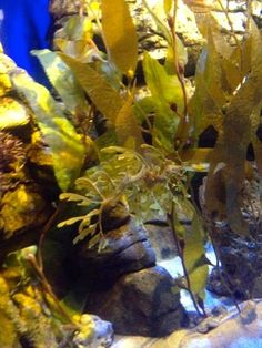 DIVE OCEANS Blog: リクエストツアー