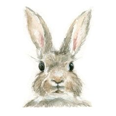 Watercolor Rabbit, Rabbit Print, Bunny Print, Animal Print, Rabbit, Jackrabbit