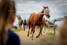 výletnice | Snová Farma NOE Horses, Animals, Asia, Animales, Animaux, Animal, Animais, Horse