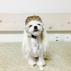 리얼리리엉릴릴리릴리 . . #릴리 #메롱 #일상 #모자 #귀여워 #멍스타그램 #독스타그램 #말티즈 #말티즈그램 #쪼꼬미 #lilly #lily #maltese #maltese101 #puppy #puppylove #dog #dogstagram #pet #petstargram #instadog #dailydog #dailydog #�� http://misstagram.com/ipost/1563079278866133986/?code=BWxLFKUlvPi