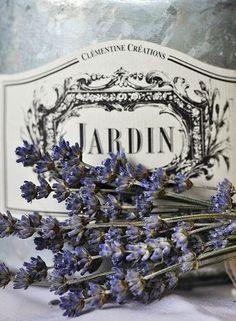 Jardin of lavender.