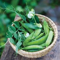 Pea Sugar Ann (Green) 100 Organic Seeds by David's Garden Seeds for sale online Easy Vegetables To Grow, Growing Veggies, Organic Vegetables, Gardening Vegetables, Herb Seeds, Garden Seeds, Raspberry Plants, Growing Tomatoes In Containers, Water Features In The Garden
