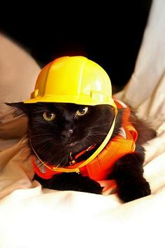Construction CAT