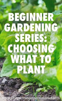 Are you new to gardening? Our beginner gardening series will help answer your questions, including choosing plants for your garden patch. Low Maintenance Garden Design, Organic Gardening Tips, Gardening Tools, Urban Gardening, Herb Gardening, Container Gardening, Home Vegetable Garden, Hardy Plants, Garden Pests