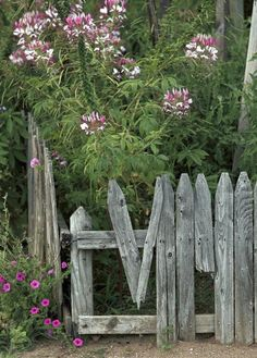 Rustic Garden...old weathered & broken picket fence...with flowers.