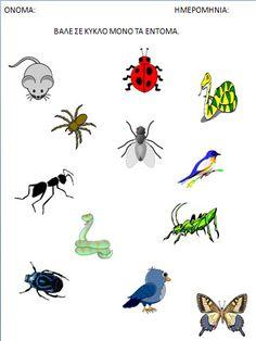 ΦΥΛΛΑ ΕΡΓΑΣΙΑΣ ΣΧΕΤΙΚΑ ΜΕ ΤΑ ΕΝΤΟΜΑ ΓΙΑ ΤΟ ΝΗΠΙΑΓΩΓΕΙΟ Preschool Activities, Worksheets, Bugs, Crafts For Kids, Snoopy, Concept, Spring, Animals, Education