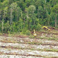 grünes Einhorn: Das Problem mit dem Palmöl
