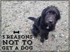 three really good reasons why you should not get a dog...and one really great one why you should!