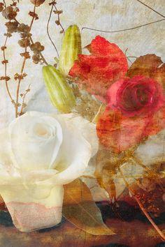 Floral Art Print  Botanical Art Print  Rose Flower by DUEALBERI, $30.00