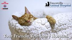 Your Friendly Veterinary Hospital | Tuscawilla Animal Hospital has veterinarians that care about cats and dogs too! Call us today to schedule an appointment. #veterinarymedicine #animalhospital Good Morning Sweetheart Images, Good Morning Rose Images, Kittens Cutest, Cute Cats, Good Morning Cat, Teddy Bear Images, Kitten Photos, Good Night Sweet Dreams, Youtube