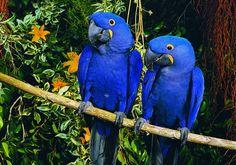 Papageien des Loro Parque als Kinostars