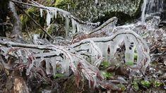 Ledové království v zajetí ledu