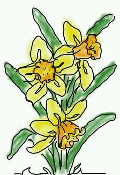 Daffodil bulbs arriving at the store this week!