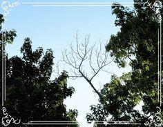 Day 193. Yesterday's photo was kind of looking like a postcard. . . . . .  #yearofcreativehabits #art #artist #artistoninstagram #artwork #art#photo #photoaday #photograph #photography #photooftheday #photoadaychallenge #naturephotography #nature