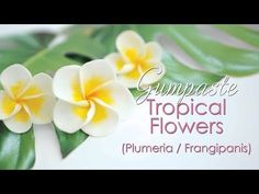 Hi and welcome to my video tutorial. In this tutorial I am going to show you how I make gumpaste Plumeria / Frangipani tropical flowers which are perfect to add a summer theme to your cakes or cupc. Sugar Paste Flowers, Icing Flowers, Buttercream Flowers, Fondant Flowers, Clay Flowers, Paper Flowers, Tropical Flowers, Hawaiian Flowers, Small Flowers