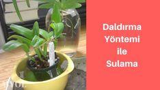 daldırma yöntemi ile orkide sulama Concrete Path, Plants, Gardening, Lawn And Garden, Plant, Planets, Horticulture