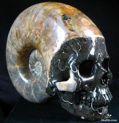 skull carved from an ammonite fossil