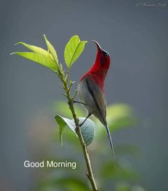 Loan kpi/Thy pti Beautiful Morning Quotes, Good Morning Beautiful Pictures, Happy Morning Quotes, Morning Greetings Quotes, Good Morning Picture, Good Morning Flowers, Good Night Image, Good Morning Messages, Good Morning Good Night