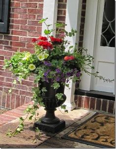This lovely Urn mix of petunia, geranium, verbena and ivy create instant porch appeal.