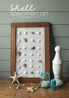 Shell Specimen Art-bring a beachy feel to your home in no time at all!