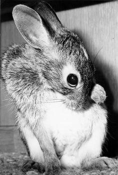 Cute Shy Pet Rabbit