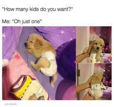 One furry sweet puppy kid...