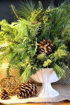 cedar and pinecones