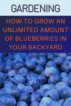 Growing Blueberries, Growing Fruit Trees, Growing Herbs, Homemade Plant Food, Blueberry Bushes, Organic Fruits And Vegetables, Homestead Gardens, Outdoor Flowers, Container Gardening Vegetables