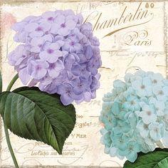 Hydrangea Art - Hydrangea Hortensia by Mindy Sommers Decoupage Vintage, Decoupage Paper, Flower Images, Flower Art, Hydrangea Painting, Framed Prints, Art Prints, Canvas Prints, Paper Cards