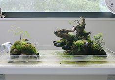 5 aqua terrarium
