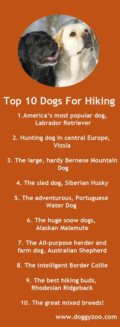 Top 10 Dogs For Hiking