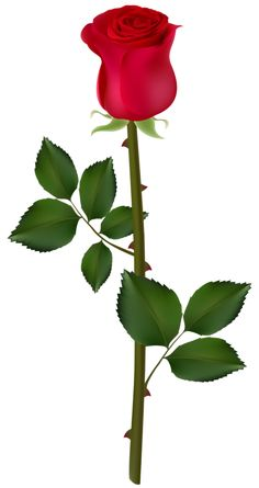 Red Rose PNG Image