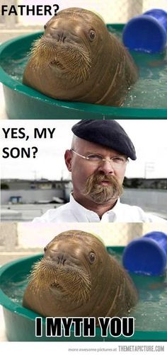 bhahahahaha!!!! Best stache/walrus ever! I love mythbusters. Always learn so much.