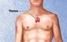 The THYMUS GLAND, a part of your immune system situated in the upper chest beneath the breastbone, may trigger or maintain the production of antibodies that result in the muscle weakness Myasthenia Gravis, Muscle Weakness, Autoimmune Disease, Immune System, Clean House, Feel Good, Health Tips, The Cure, Healing