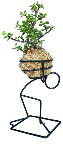 Kokedama Elephant Bush - Portulacaria Afra and Holder Set House Plants Decor, Plant Decor, Art Fer, Wrought Iron Decor, Head Planters, Metal Forming, Scrap Metal Art, Flower Stands, Metal Models