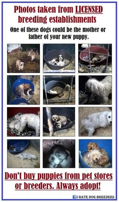 Never Buy...ALWAYS ADOPT. When you buy..........A shelter animal will die